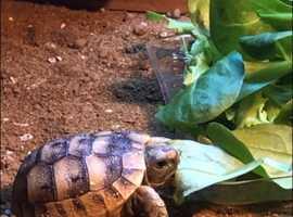 Adorable baby tortoises