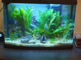 Fish and 64L tank for sale