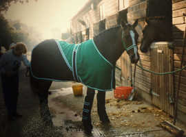 Equine horse travelling rug and matching boots