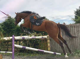 Perfect eventing prospect.