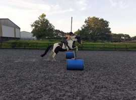 Caring horsemanship flexible livery, retirement and rehab, lovely facilities, 24 hour supervision and care