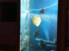 Tropical fish tank and fish for sale