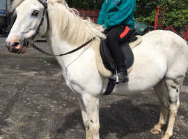 Stunning lead rein pony