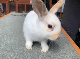 Baby boy rabbit