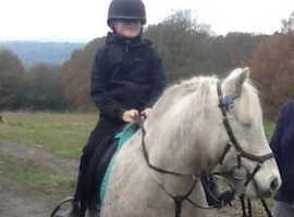 Mother / daughter pony looking for new home
