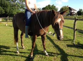 Pretty chestnut mare
