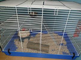 Female gerbil w/ cage