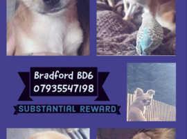 Help find Luna Bradford substantial  reward for safe return