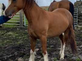 Section C Filly