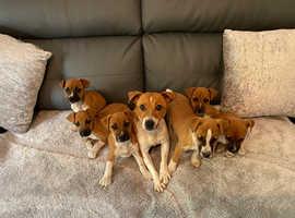 Plumber terriers