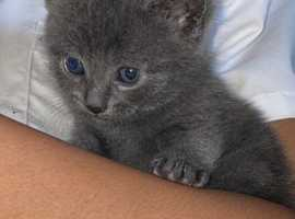 4 beautiful kittens, 2boys, 2girls,