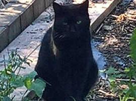Missing cat. Please help me find Little Lesley.