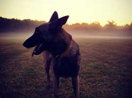 Dog walking, boarding & day Care