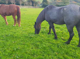 Wanted....Grazing for 2 ponies