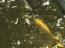 Pond shutdown