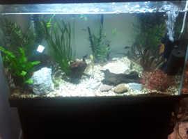 150 litre fish tank