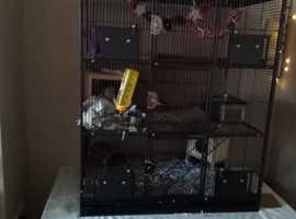 3 floor rat cage.