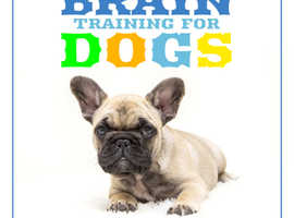 Master the skill of training your dog's brain for better behaviour