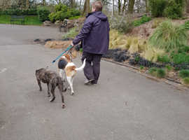 Dog walking  & pet checking service, pet taxi, training.