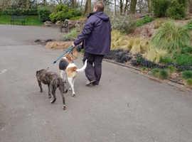 Dog walking  & pet checking service