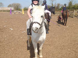 Wanted 1st pony for loan/lwvtb