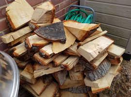 Oak tree logs for sale