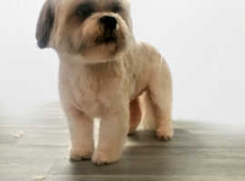 10% OFF Dog Grooms 2019 @KLBDogGrooming Personalized, Professional One to One Appointments.