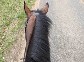 Wanted - horse to loan to move yards