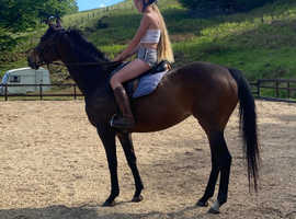 Sweet allrounder mare
