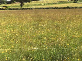 Pasture Land with Natural Water Course.