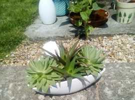 3 Bowls of succulents