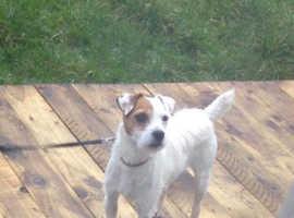 Patsy the rescue dog