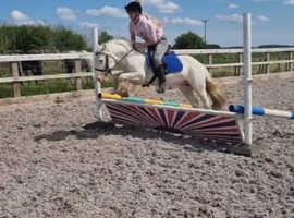 Lovley pony club pony