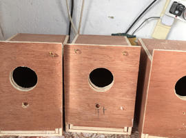 Breeding box's and carrying boxs