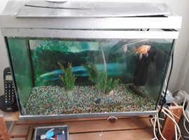 free fish tank with 2 goldfish