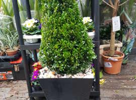 Freshly Made Indoor/Outdoor planters