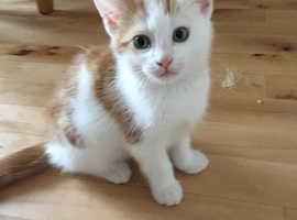 Kitten for rehome