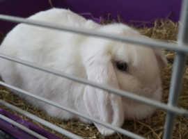 Female rabbit + more