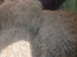 EXCELLENT QUALITY 50 SMALL HAY BALES