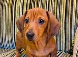 One handsome puppy