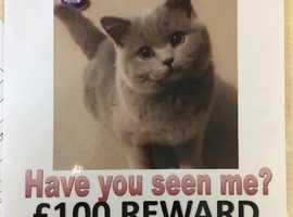 MISSING CAT £100 REWARD
