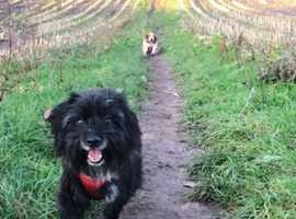 Patterdale Wanted