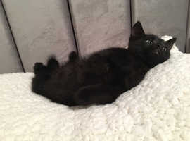 Four beautiful kittens