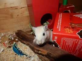 Small Pet Boarding in Croydon - £2.00/day