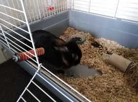 Rabbit and in door cage