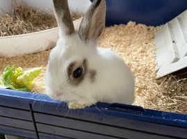 Baby female bunny