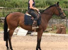 Young talented blood mare