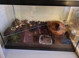 2 African land snails