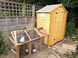 7 hens for rehoming