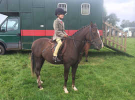 'Woody' cracking little hunting little/fun pony & has done it